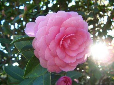 Floristeria belum plantas para el oto o e invierno for Plantas para invierno