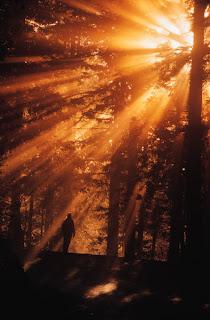 Lo excepcional aparece como la luz en el bosque, sin necesidad de buscarlo