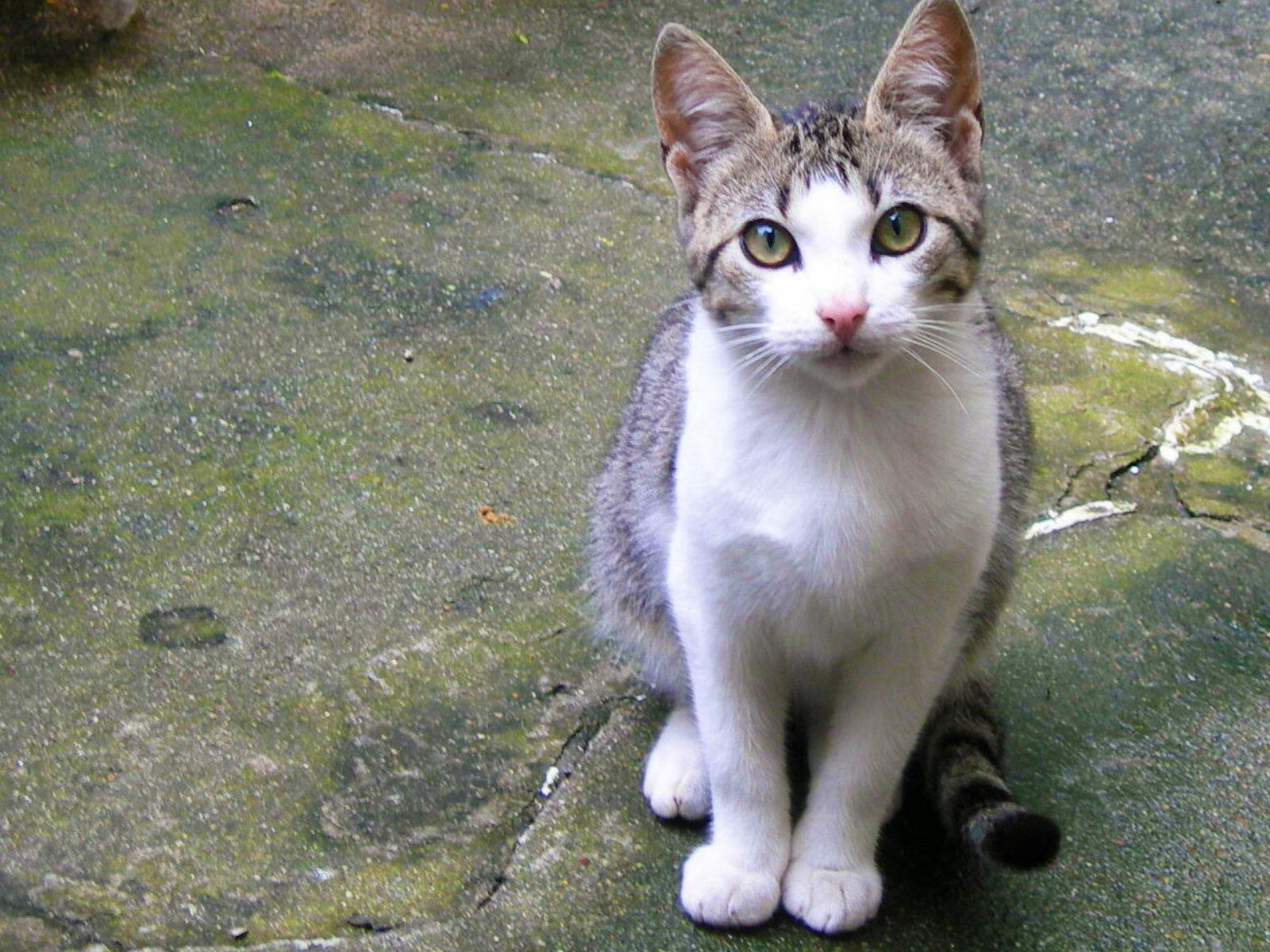 Resultado de imagem para colaboração gatos