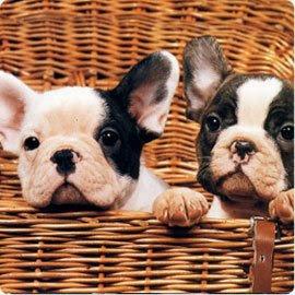 http://4.bp.blogspot.com/_vz4lMUi6-kE/SjNRtlFA-oI/AAAAAAAAAjM/X558TxBy1U8/s320/bulldogfrances.jpg