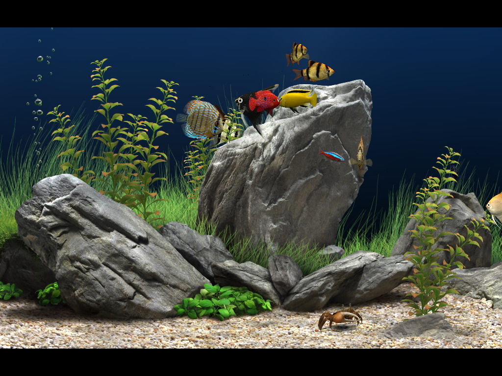Dream aquarium screensaver key