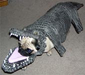 pug dog in alligator costume