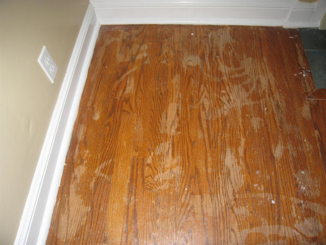 Why do dogs hardwood floors carpet vidalondon for Hardwood floors jacksonville nc