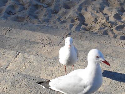 Manly Beach DSC02583