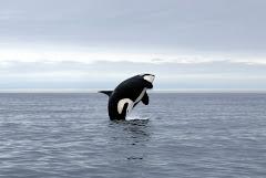 orca air