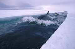 orca channel