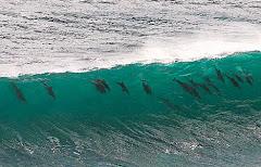 pod surfing