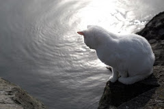 curious feline