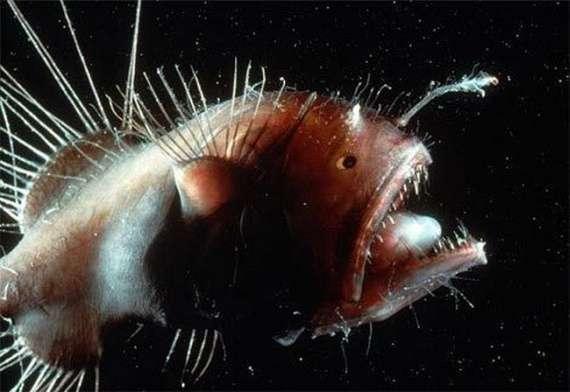 Ikan-ikan mengerikan dari laut terdalam