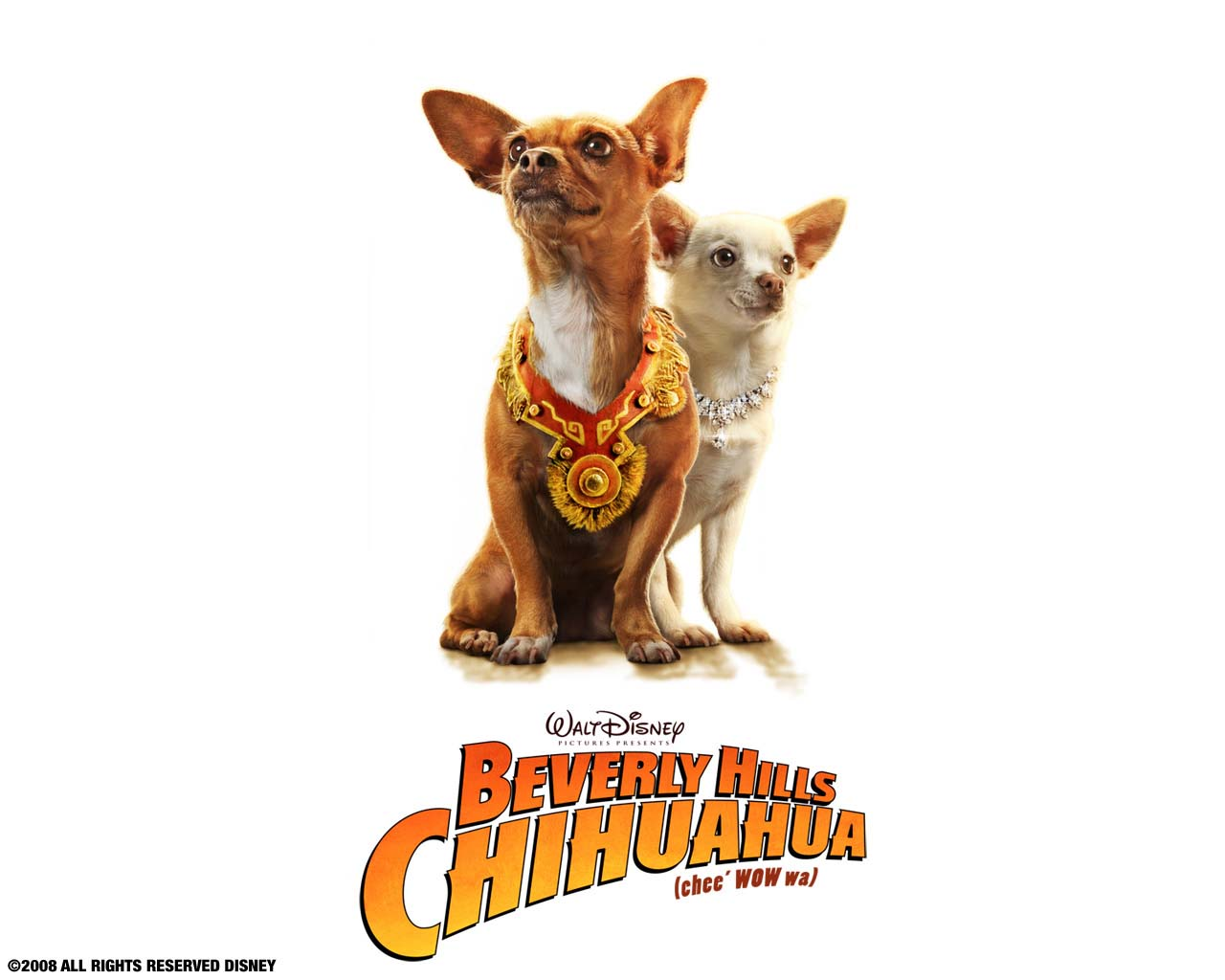 BEVERLY HILLS CHIHUAHUA 2: THE FAMILY JUST GOT BIGGER WALLPAPERS