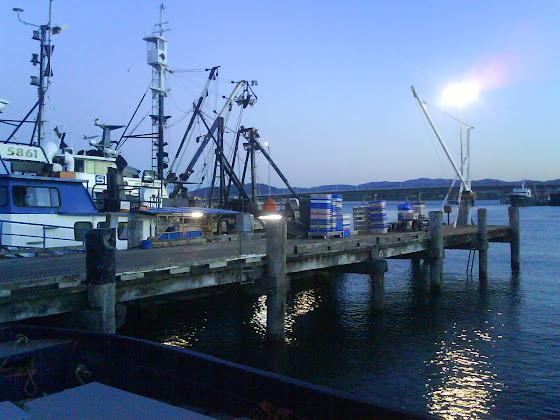 Fish Factory - Nueva Zelanda