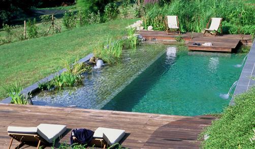Dise o de jardines cuidado de plantas page 6 for Como decorar un jardin con piscina