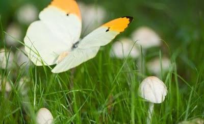 Jardiner a paisajismo hongos de jard n for Hongos de jardin