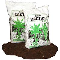 Tierra Cactus