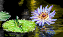 Water lily and flower
