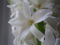 Blomsterlökar