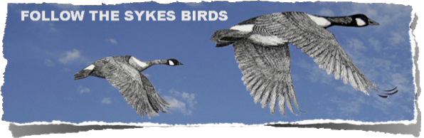 Follow The Sykes Birds