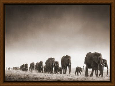 image of elephants
