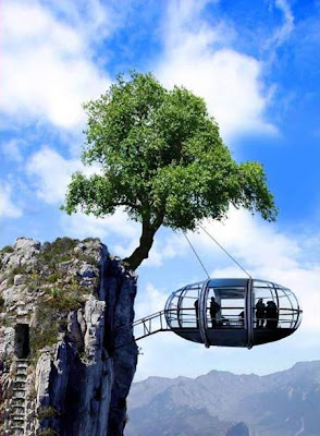 picture of a tree house