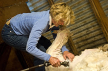 sally shearing