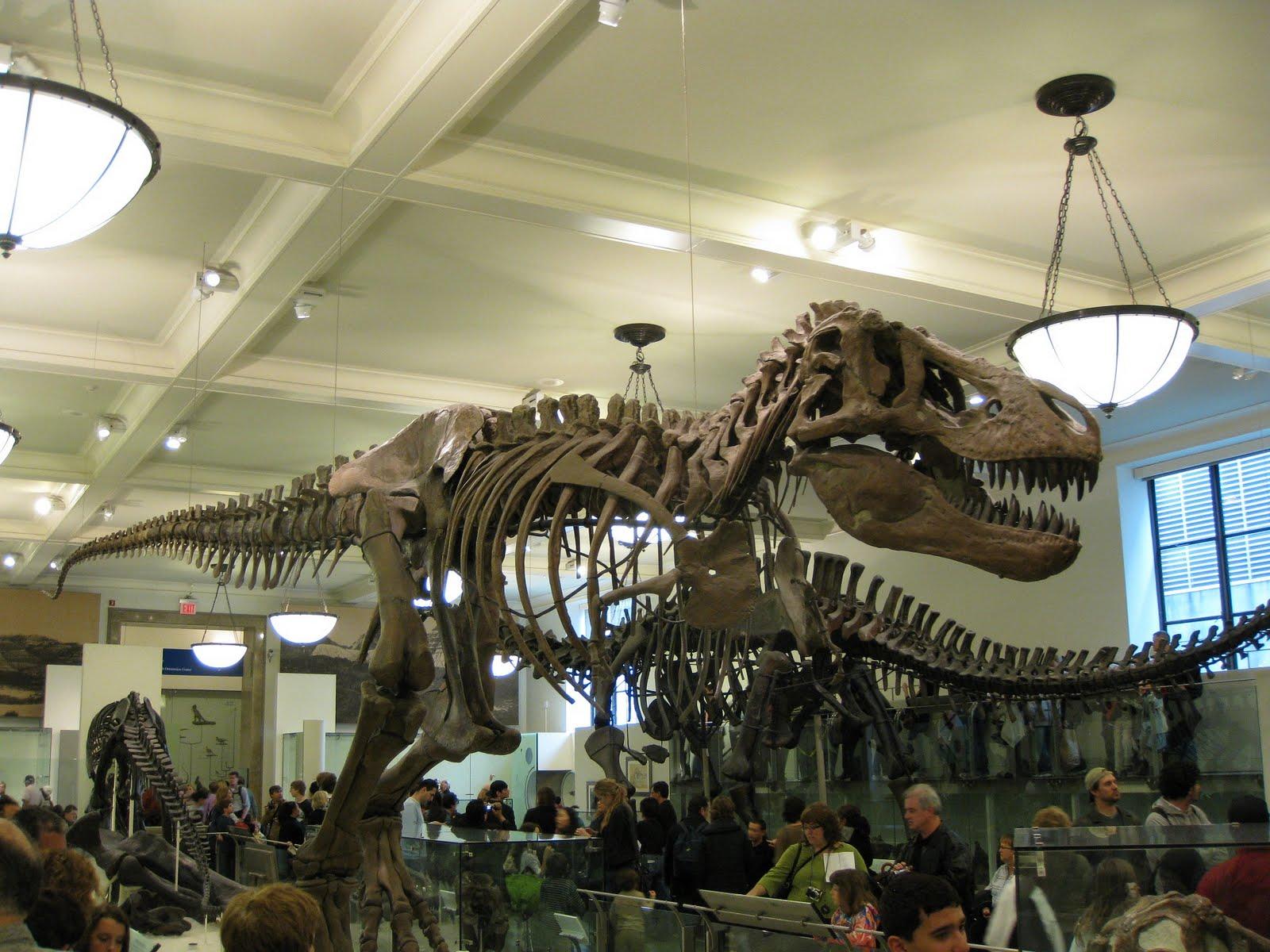 Natural History Museum New York Virtual Tour