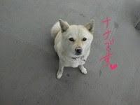 ナナ姉ちゃん享年17歳(犬年齢80歳)