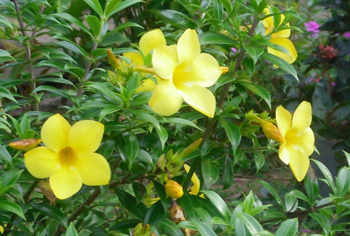 Guayana eje sur upata santa elena de uair n jardines de for Plantas ornamentales tropicales