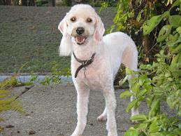 Sammy, My Granddog