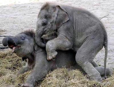 Elephants games