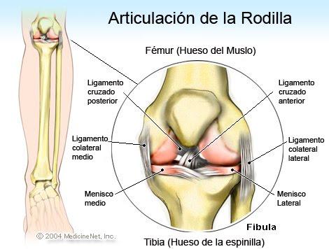 Consejos, Trucos y más: Dolor de rodilla. Entenderlo y tratarlo