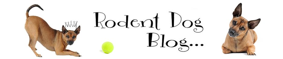 Rodent Dog Blog