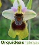 Orquídeas ibéricas