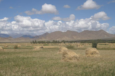 Picture of a field in Tibet from a trip in 2007