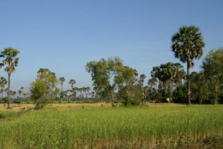 Image of the Cambodian countryside
