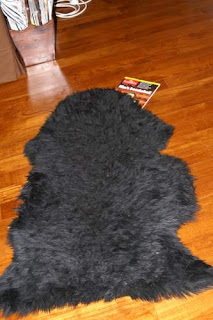 Image of your Hero, Pommes, on top of The Economist, May 30th to June 5th, 2009, edition. Or is that a sheepskin.