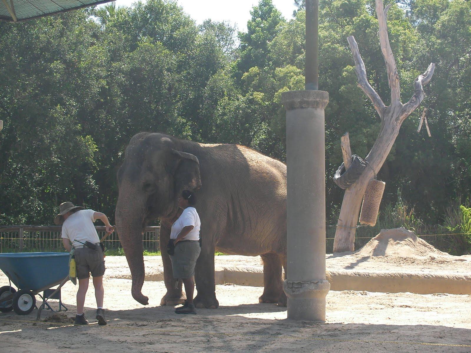 Central Florida Zoo And Botanical Gardens Garden Ftempo