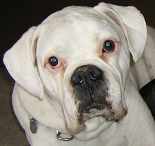 Otis 1997-2008