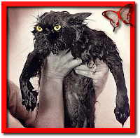 Chat échaudé craint l'eau froide