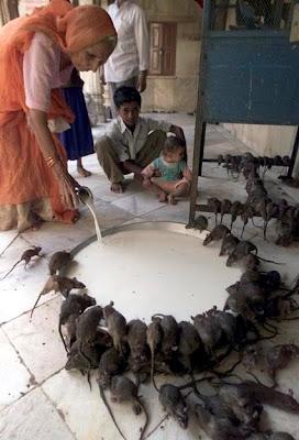 http://4.bp.blogspot.com/_wGCq5-udNl8/S7yeMMz17PI/AAAAAAAAFWk/EB4_3-SWTgk/s400/tikus.jpg
