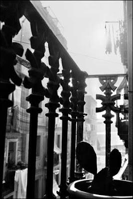 Cactus y ropa tendida. 2006. copyright Judith Belmonte Rivera.