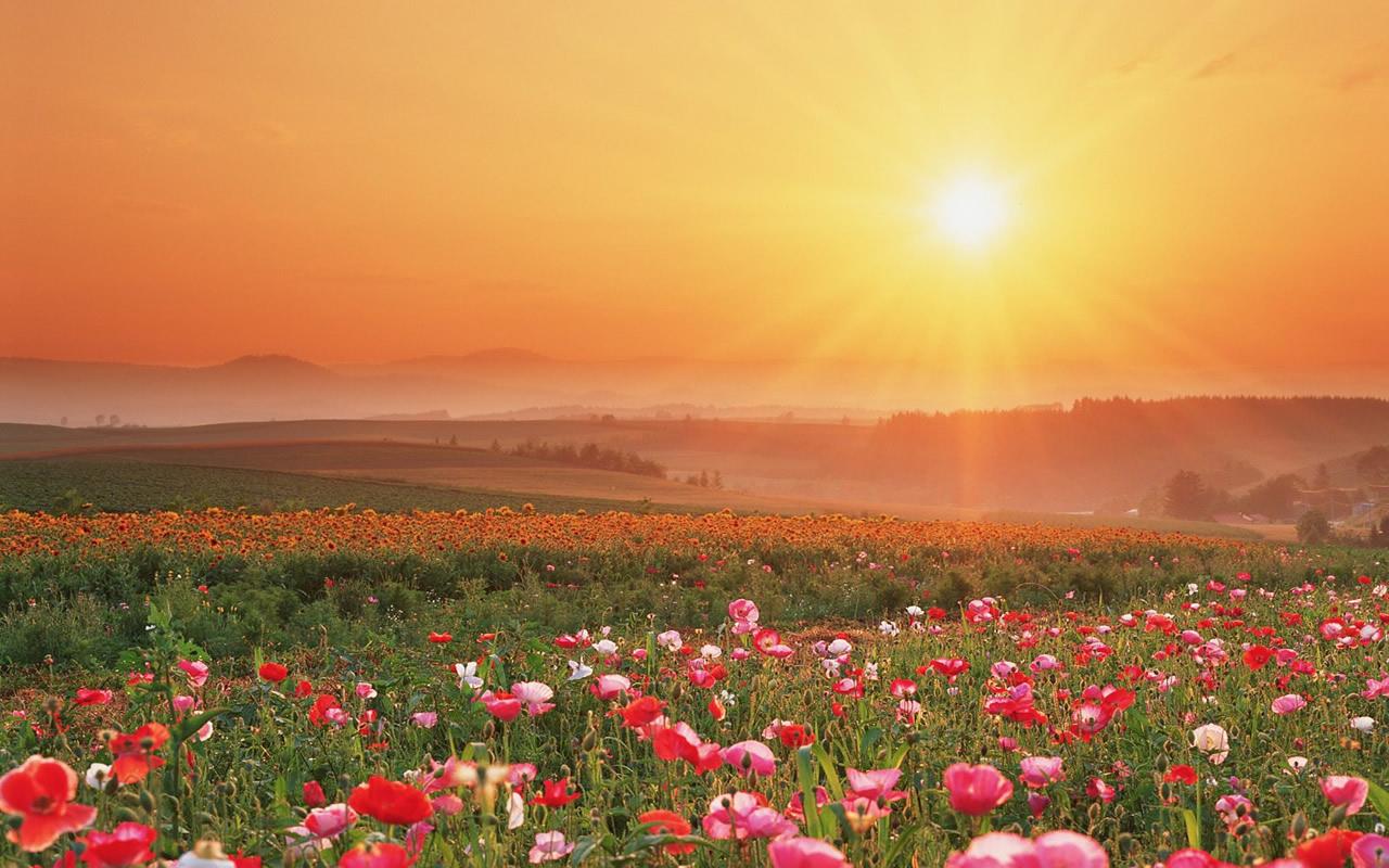 http://4.bp.blogspot.com/_wHC0LRHPSO4/TRgHaZVsG-I/AAAAAAAABJc/_Uvi-KIasqc/s1600/field-of-flowers-wallpaper-1280x800-0144.jpg