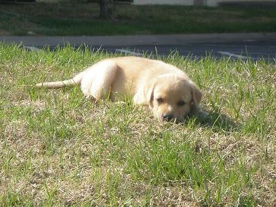 la vie est belle dans le midwest miss leela doggy dog. Black Bedroom Furniture Sets. Home Design Ideas
