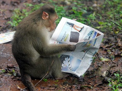 http://4.bp.blogspot.com/_wJVn6Yc7Q1E/TLSOnLKL8cI/AAAAAAAAABI/q5ZCscsWVBc/s1600/monyet+plangon.jpg
