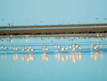 Fauna de los lagos