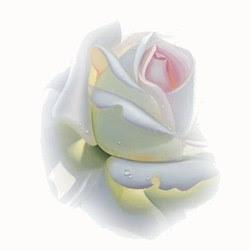 اجعل حياتك وردة بيضاء