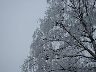 luminen puu
