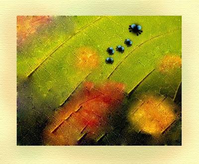 Листо, цвете и точки.