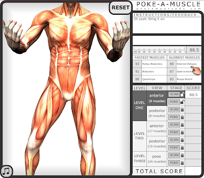 James Fowler Medical Studies Introduction Anatomy Arcade Whack A