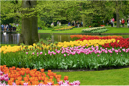 beautiful flower gardens of the world Photo