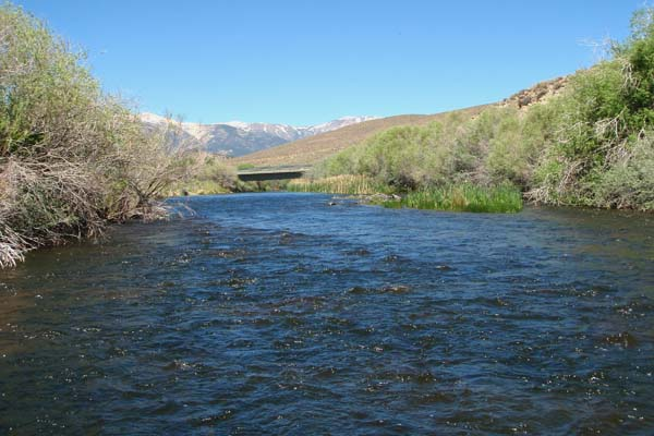 Fisherdad east walker river lyon county nv and nearby for Walker river fishing